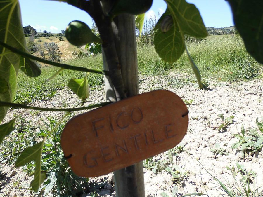 Azienda agricola biologica livorno